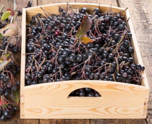 Ящик с черноплодной рябиной