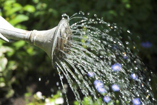 Вода из лейки