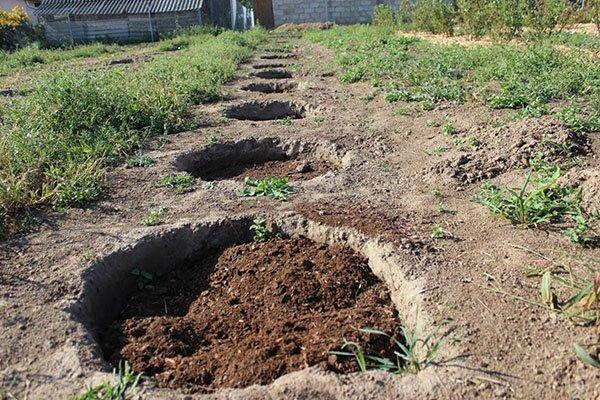 Посадочные ямы в саду