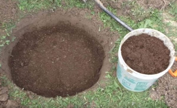 Подготовка ямы для пересадки плодового дерева