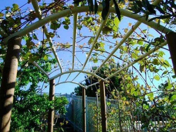 Арки для винограда, изготовленные своими руками
