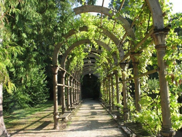 Деревянная арка для вьющихся растений