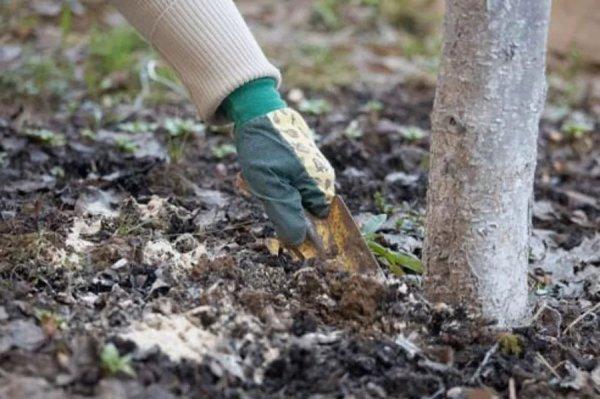 Уход за садовым деревом