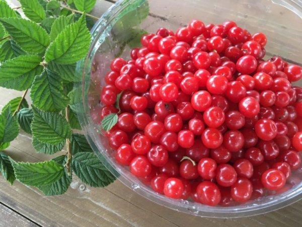 Плоды войлочной вишни