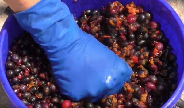 Приготовление вина из смородины