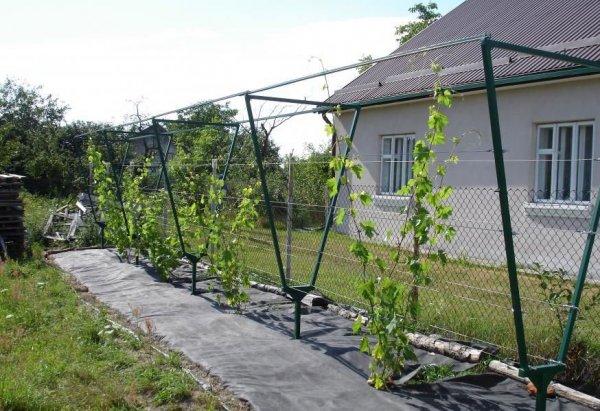 Шпалера для винограда