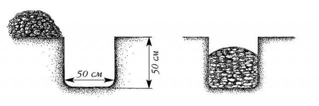Размер лунок под шелковицу