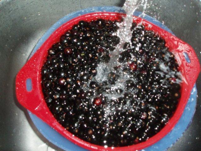 Промывание черной смородины
