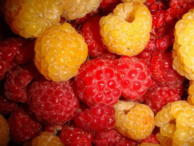 Красная и желтая малина