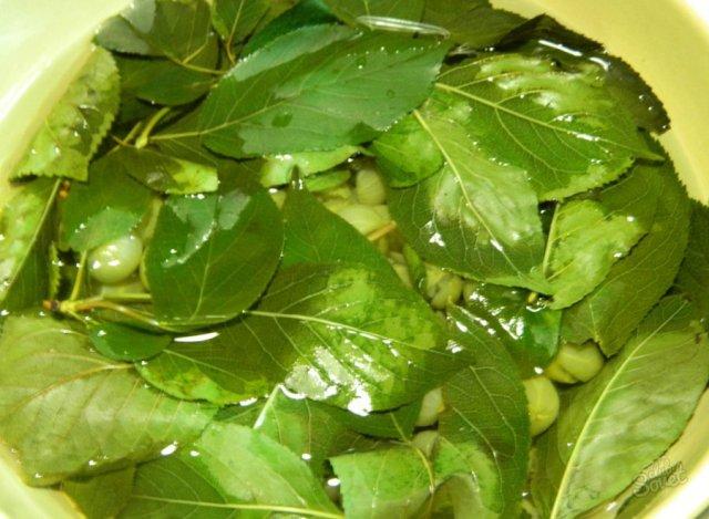 Отвар из зеленых листьев