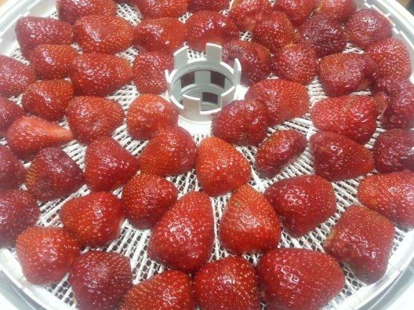Сушка ягод в электросушилке