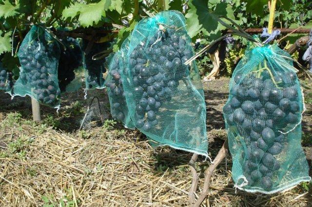 Мешки для защиты винограда от ос