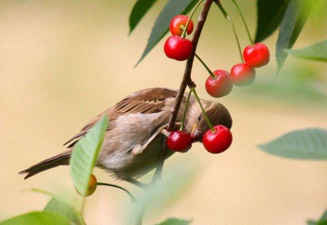 Птица на ветке с ягодами