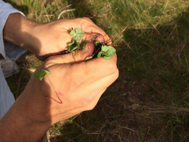 Оттирание пятен от рук травой