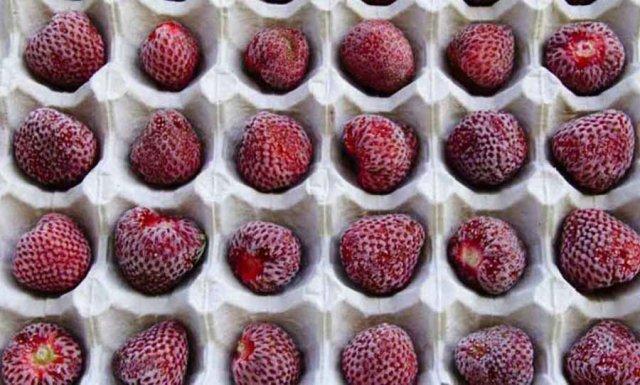 Сухая заморозка ягод клубники