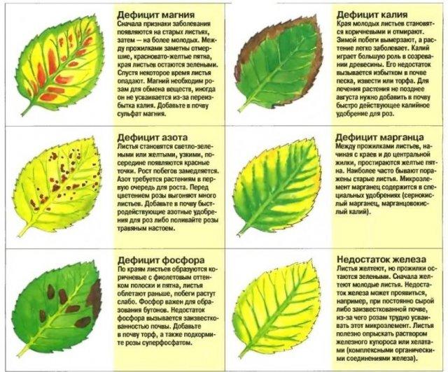 Дефицит микроэлементов у вишни