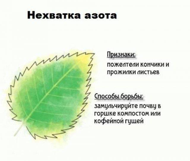 Нехватка азота у деревьев