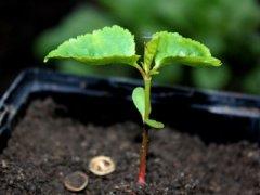 Зеленый росток