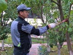 Уход за черешней в саду